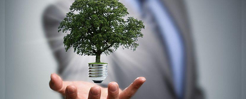 Ações sustentáveis nas empresas: veja 3 dicas eficientes